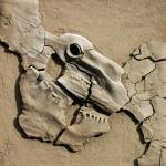 33 - Fossil, 61x61, 2000
